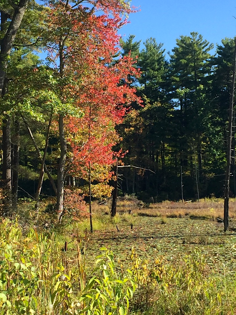 Fall over the Beaver Pond